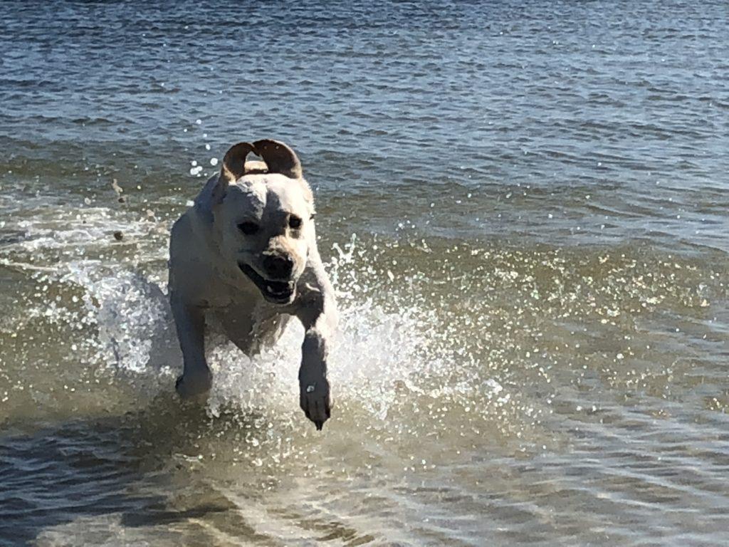 Skiff Dog Mosquito Lagoon Charter